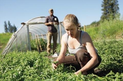 """Fermierii își vor putea verifica situația """"la zi"""" pe site-ul APIA. Va fi instalată o fereastră specială în acest sens"""