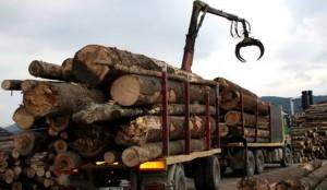 export lemn