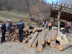 control firma lemne