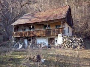 casa cu brad14