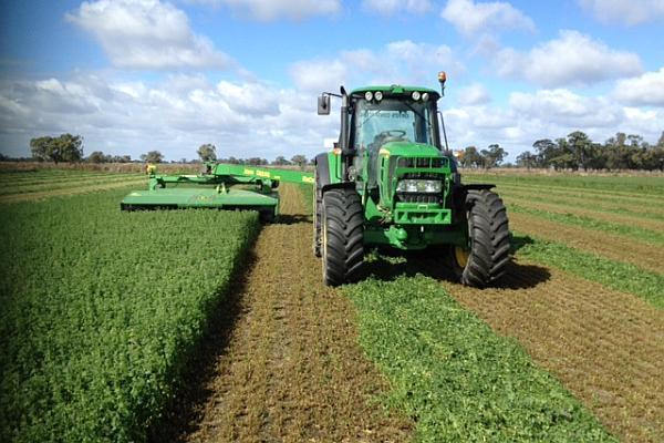 Faur, directorul APIA: Fermierii vor putea lua în acest an în jur de 400 de euro pe hectarul de lucernă