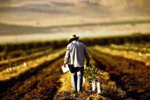 agricultori01