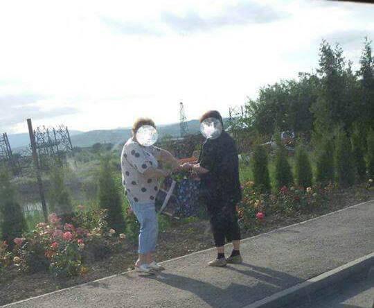 """FOTO ŞTIREA TA: Ruşine! Nu mai rupeți florile! Două femei din Ocna Mureş fotografiate de un trecător """"la cules"""" de trandafiri de pe domeniul public"""
