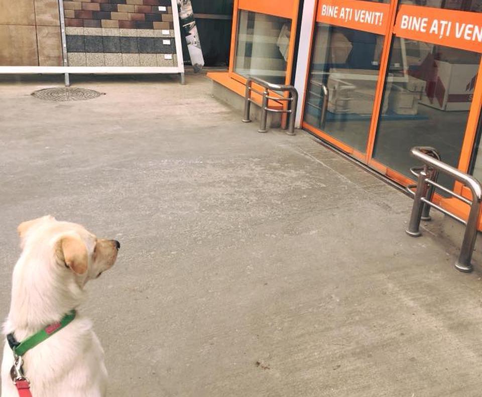 unguent comun într-un magazin de animale de companie)